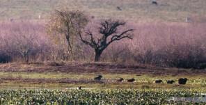 """Foto do livro """"Campos do Sul"""", de Valério de Patta Pillar e Omara Lange - uma das obras de referência do filme."""